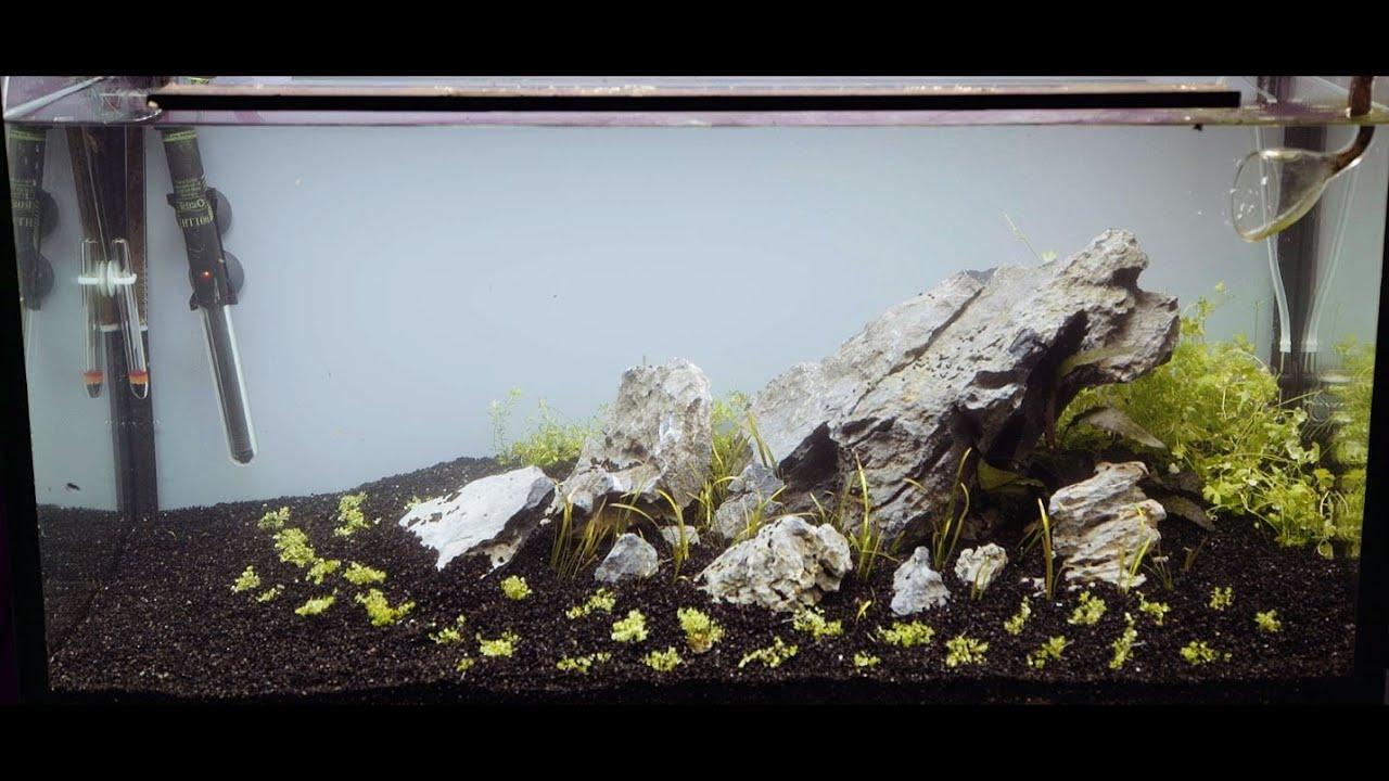 112l Iwagumi Aquascape Set-Up - YouTube