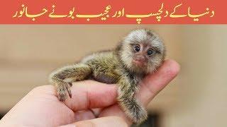 9 Amazing Dwarf & Smallest Animals in the World - Amazing Pakistan in Urdu