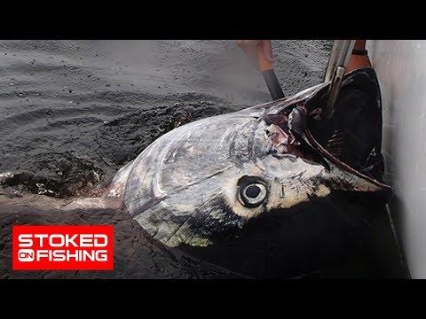Bluefin Tuna Brawl at Prince Edward Island, part 1