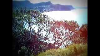 Happy Swinging View Horizon Hahei Beach Baby Tunes Toe Tapping Sunshine Sand and Grassy Waves