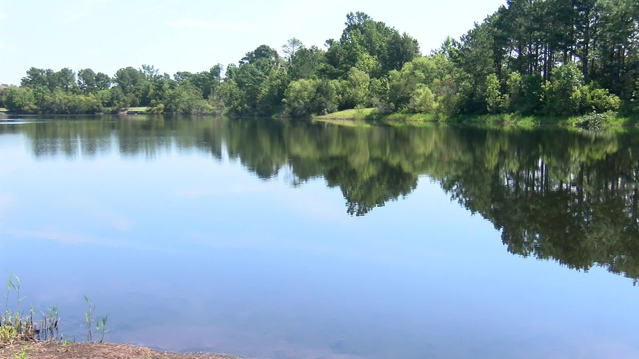 3 Dogs Die After Swimming In Pond With Blue-Green Algae