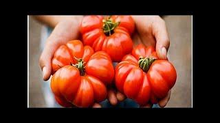 Những điều cần biết về thực phẩm Non GMO| ECO-HEALTH.VN