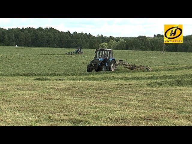 Погода выбила из графика сельское хозяйство Беларуси