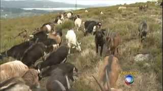 domingo espetacular Repórter sai em busca do lobo ibérico, espécie em extinção em Portugal 13 04 201