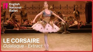 Le Corsaire: Odalisque with Shiori Kase (extract) | English National Ballet