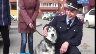 Лайма нашлась  Под Иркутском задержали злоумышленника, который похитил собаку у глухонемой жительниц