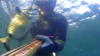 Ψαροντουφεκο - Μεγαλος φαφουτης Σαργός στα ρηχά - XL sarago spearfishing - dn sub 85