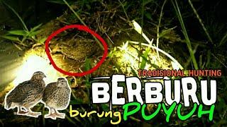 Download Video TRADITIONAL HUNTING : Berburu Burung Gemak/Puyuh (15-1-2018) MP3 3GP MP4