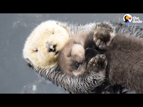 Otter Moms Really Love Their Babies