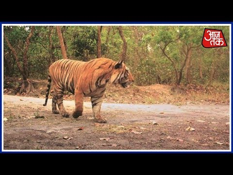3rd in 4 Days,Tiger kills Another Farmer In Pilibhit