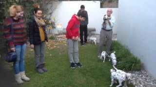 Labrador-dalmatian Kennel