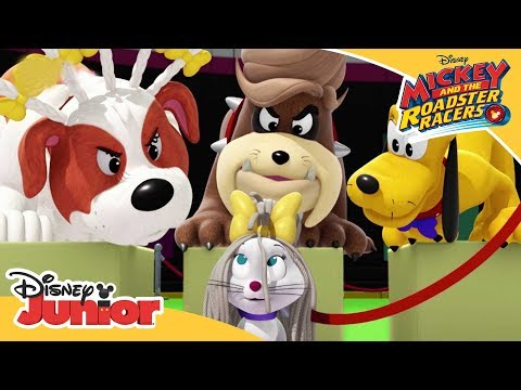 The Hot Diggity Dog Show 🌭| Mickey and the Roadster Racers | Happy Helpers | Disney Channel Africa
