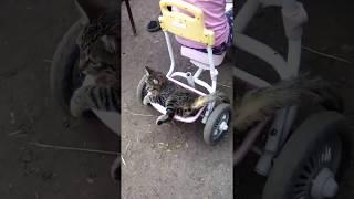 Прикол кот на велосипеде