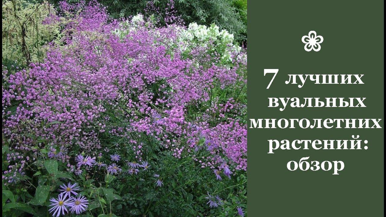 ❀ 7 лучших вуальных многолетних растений: обзор