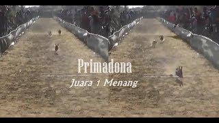 Video PRIMADONA Sang Juara 1 Kerapan Kelinci di Batuan Sumenep Madura download MP3, 3GP, MP4, WEBM, AVI, FLV Mei 2018