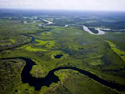 Projeto Tamanduá - SESC Pantanal