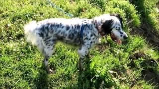 週末になると、相棒のセッター犬ラッキーを連れて畑に向かいます。主な...