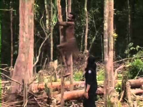Asmat - Mengenal Lebih Dekat Suku Korowai di Pedalaman Papua - IndonesiaKu Trans7