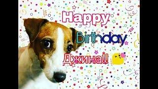 С днем рождения самую умную, красивую собаку ДЖИНУ! ( speed paint,  gift for Elli Di Pets)