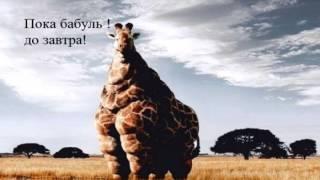 Мотивационные картинки для похудения