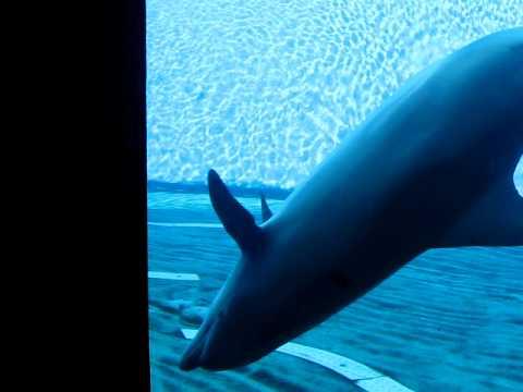 Delfini dall acquario