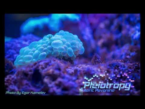Pleiotropy - Aeric Pavonine
