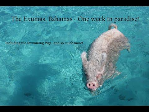 Exumas, Bahamas - One week in paradise! - Visual Vibes by TravAgSta