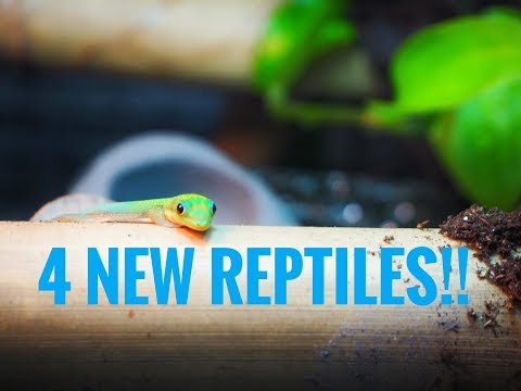 4 NEW REPTILES UNBOXING!