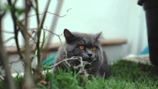 Fuji XT1 video test |  his name is Cheshire.