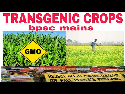 Transgenic crops|gm crops|genetically modified|bpsc mains|dmh 11 dhara|