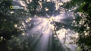 Самые опасные животные мира - Амазония