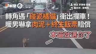 轉角遇「碰瓷橘貓」衝出攔車! 暖男嚇拿肉泥+終生飯票賠償