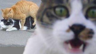 Видео приколы про животных 2014
