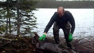 Otter & Beaver Trapping