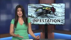 Residents experience fly infestation