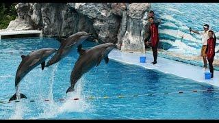 Safari World | kos kong safari world | safari world cambodia | dofine | safari world dofine