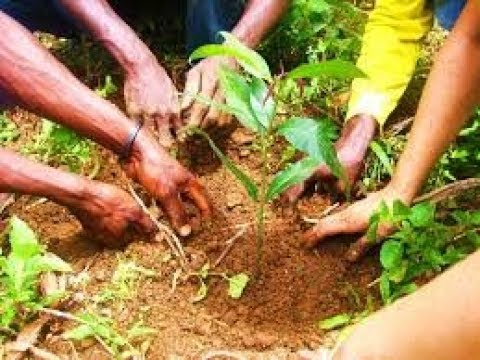 Forestry Commission recruits over 15,000 youth