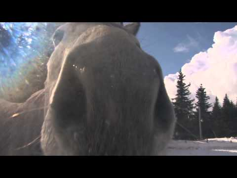White and Gray Horse Sniffing the Camera