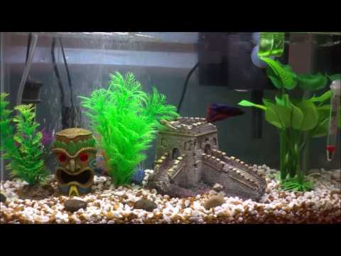 T C  TETRACYCLINE  For My Sick Betta Fish It Really Saved His Life