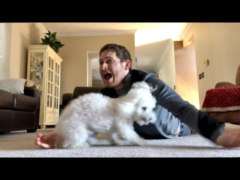 Hugging my dog for too long...