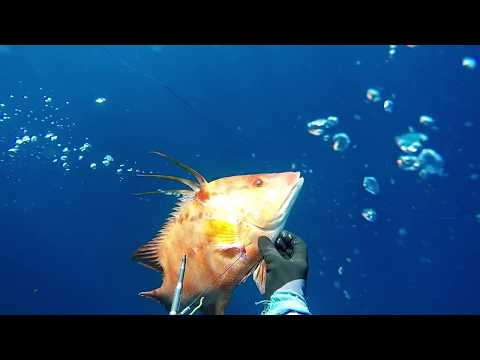 Caribbean Spearfishing, FWI Martinique