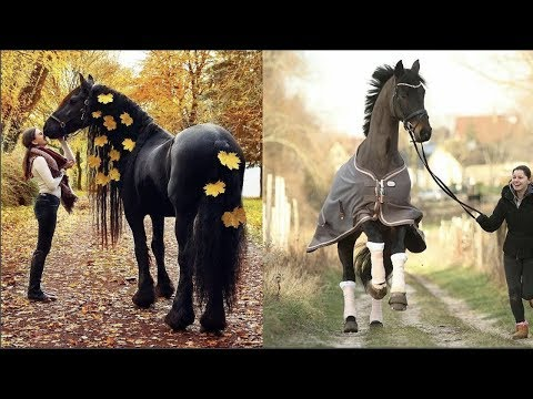 Funny and Cute Horse Videos Compilation cute moment of the horses- Cutest Horse #5
