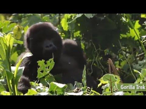 The Gorilla Trek - East African Playgrounds - Case Study