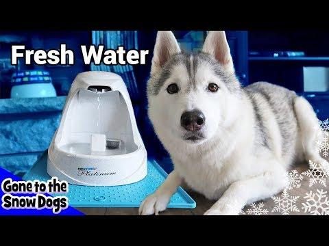 download Huskies New Dog Water Fountain