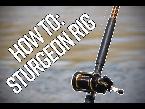 How To Rig Up For Sturgeon Fishing On The Bank!