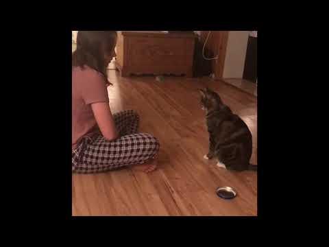 Teaching The Cat Tricks