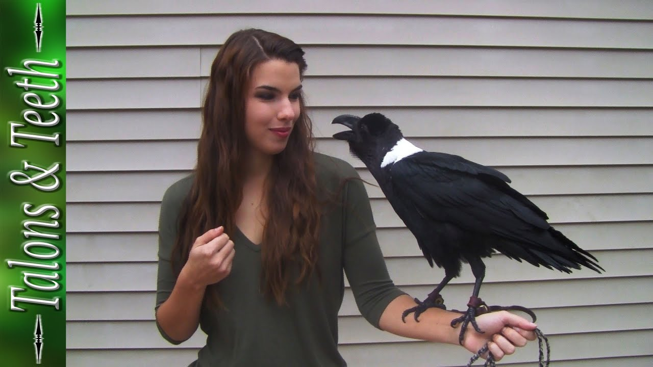 Ravens can talk! | Bird | Video