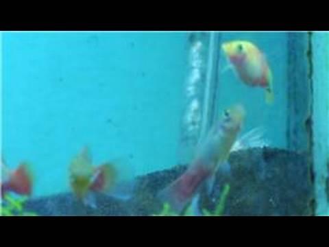 Fish tanks aquarium maintenance how to set up an for How to set up a fish tank filter