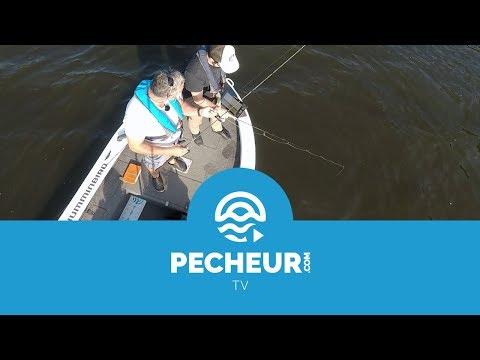 Battle Pecheur.com #1 - Perches au drop shot : leurres couleurs naturelles VS leurres flashy !