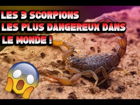 Les 3 scorpions les plus dangereux dans le monde en 2017 - Vers dans les cerises dangereux ...